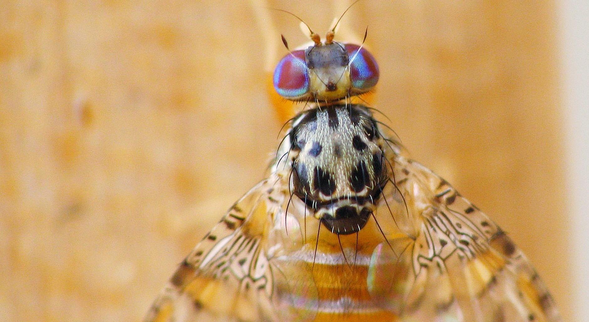 Les mouches (comme l'IA) vous reconnaissent…