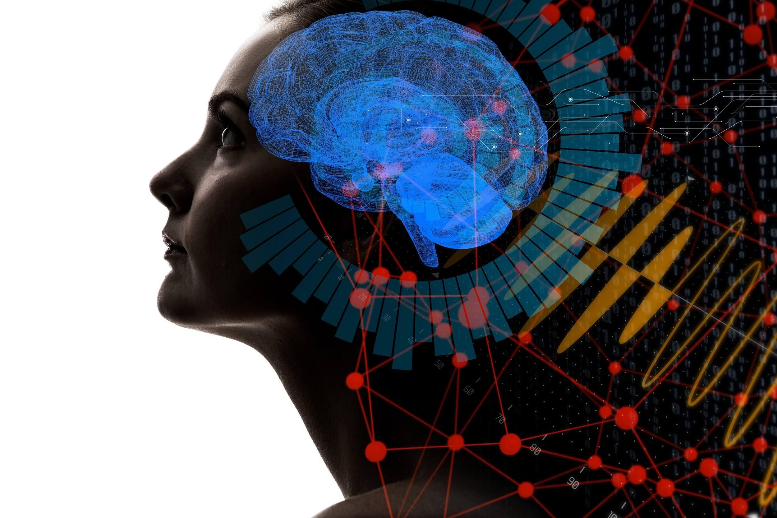 IA et coloriage de cellules du cerveau
